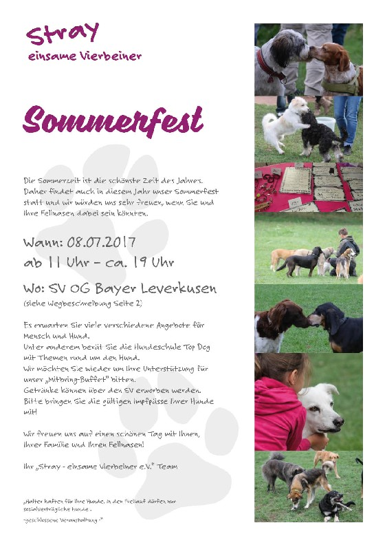 stray sommerfest 2017hp